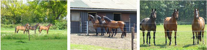 Fotos-paarden1