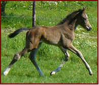 paarden.Izzylena1